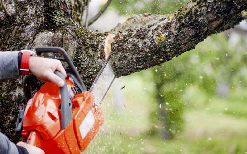 Tree limb being cut for a customer