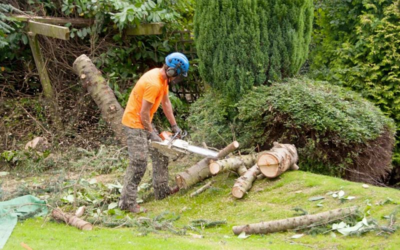 Tree branch being cut up for customer